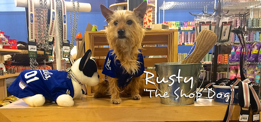 Rusty - The Shop Dog