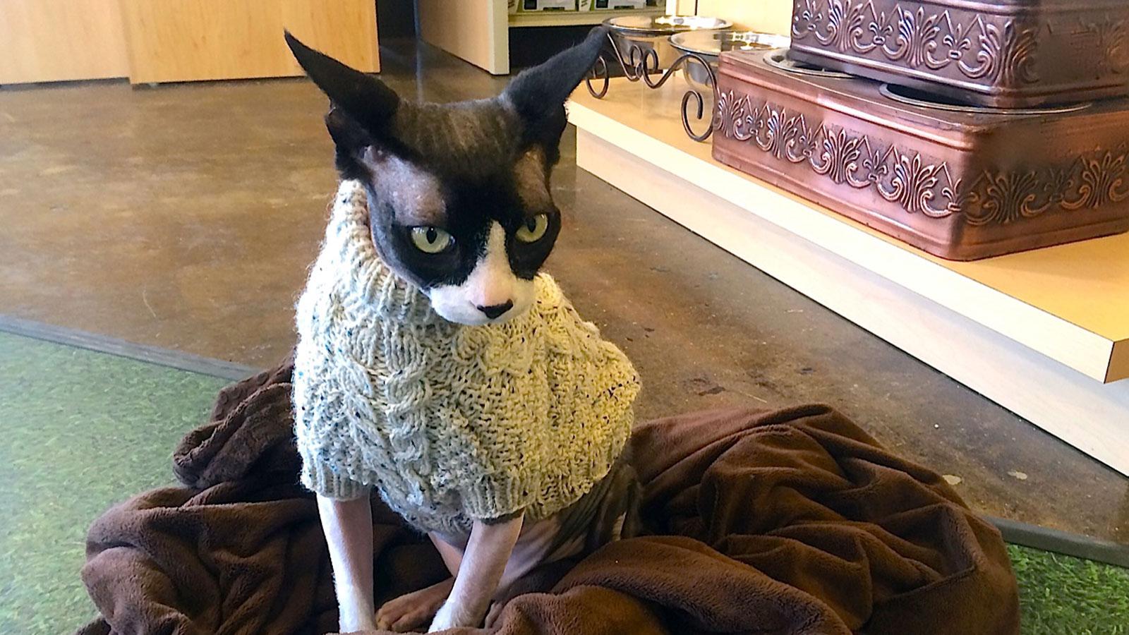 Cat-KansasCity-IMG_1431